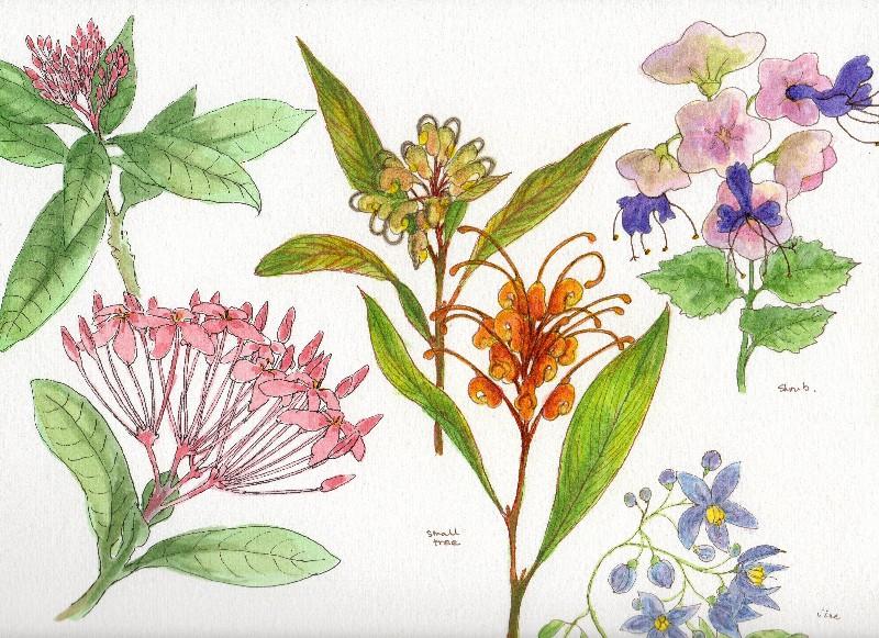 Botanical Flowers-2