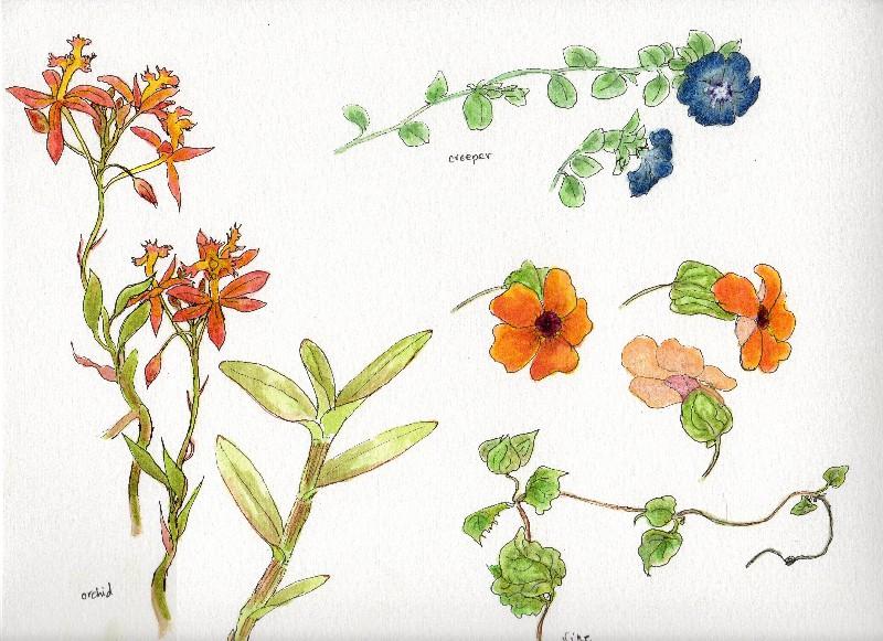 Botanical Flowers-3