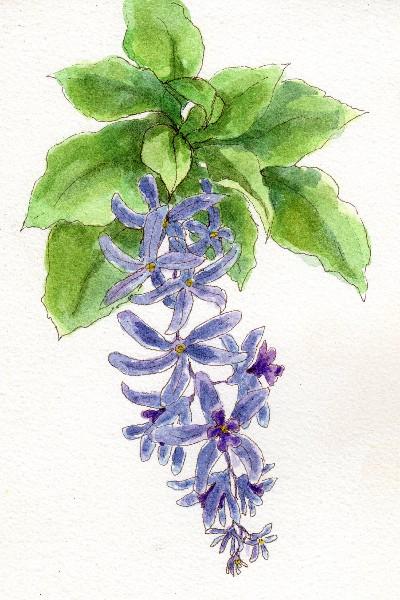 Botanical Flowers-5a