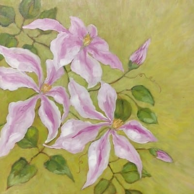 Francis' Clematis
