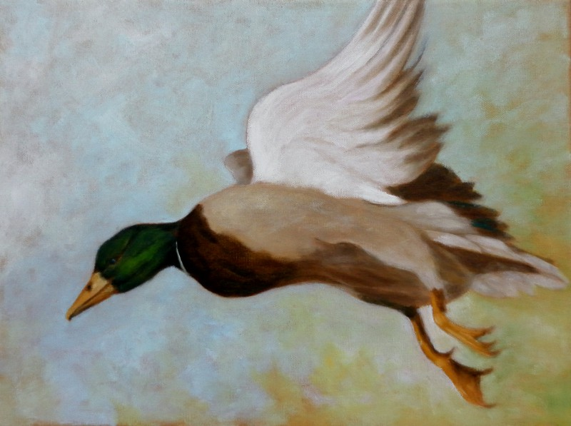 Miracle the Wonder Duck