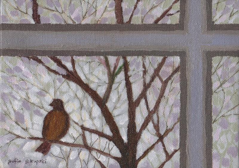 Robin Through a Window